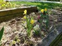 q gardens and irish spring soap