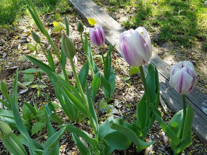 t gardens and irish spring soap