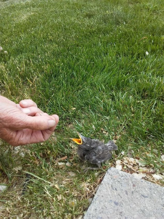 q baby bird fell out of nest