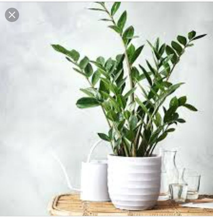 q can someone help me identify what type of plant this is
