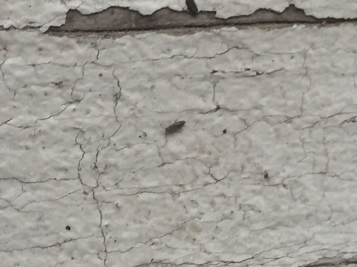 q what kinda bugs are these we live in ga they are on the outside wood