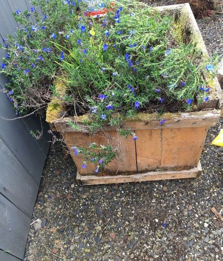 old cedar planter needed replacing what to do
