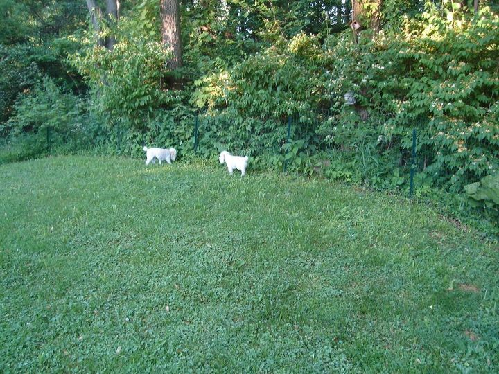 q what can i do with the yard and still have a safe place for my dogs