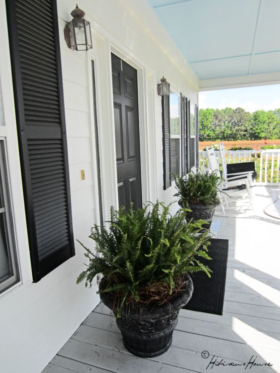 ferns are on the porch