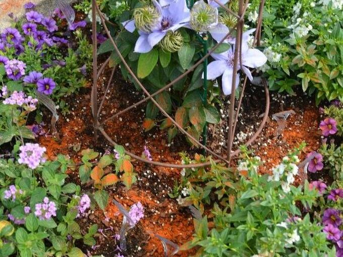 protect your containers and plants from digging squirrels