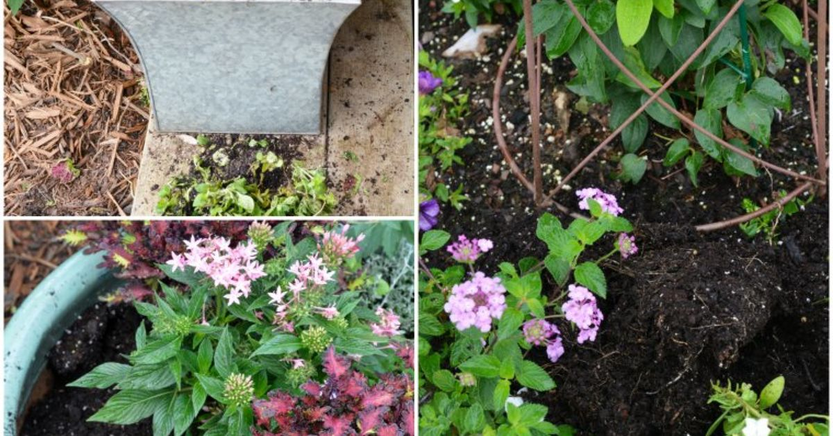 How To Protect Your Containers And Plants From Digging