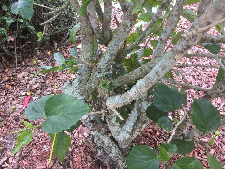 q what is growing on my tree and bushes