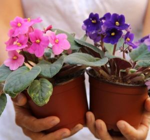 s 30 helpful gardening tips you ll want to know