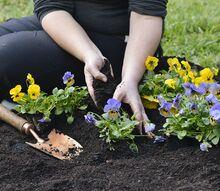 gardening tasks in june