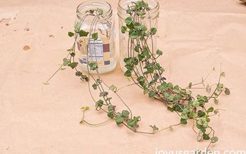 4 ways to propagate a string of hearts plant rosary vine