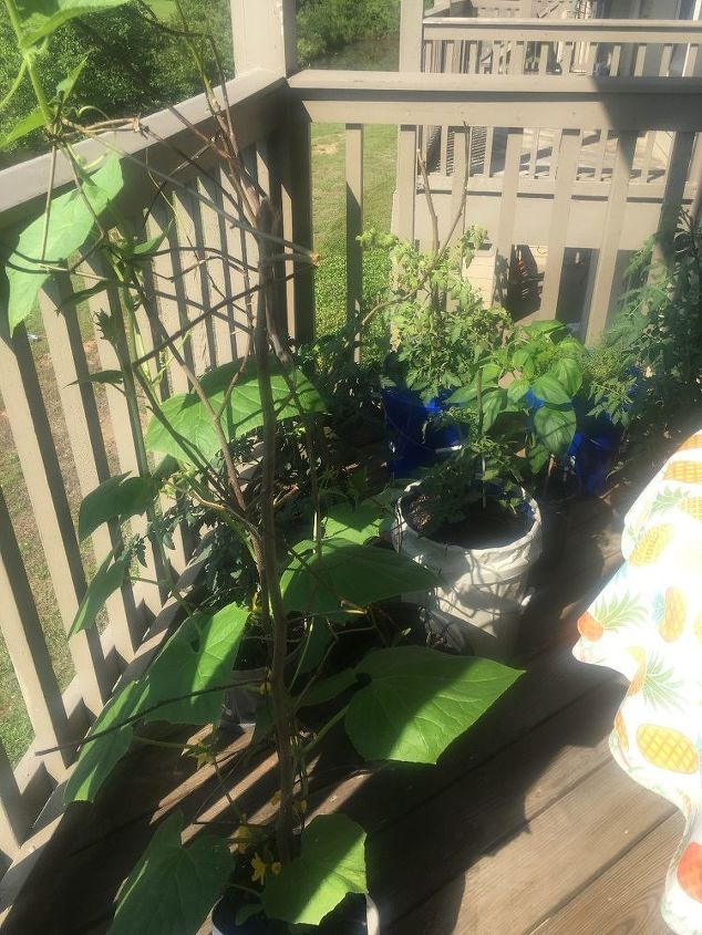 q i am growing my vegetables on my deck would like to the buckets