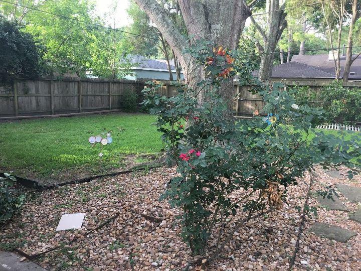 q help with my backyard