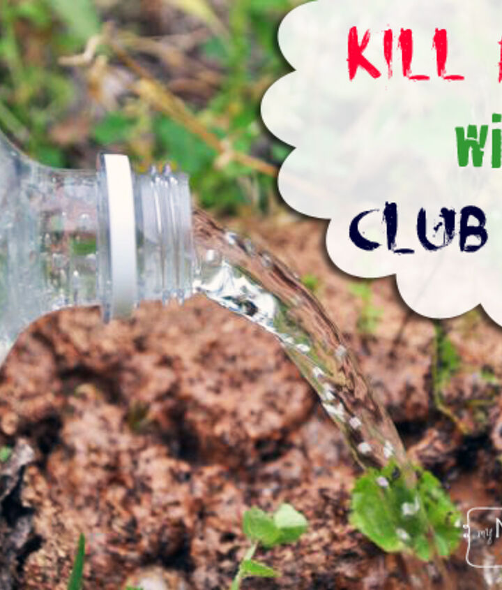 s 15 genius hacks to keep pests away while you camp, Club Soda For Those Ant Piles