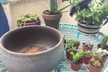 how to make a potted succulent garden