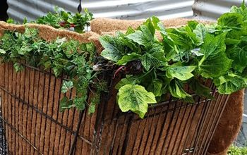 garden bed from discarded supermarket trolley