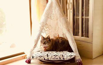 summer cats needs a tent house