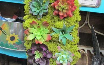 muffin tin and succulents no baking