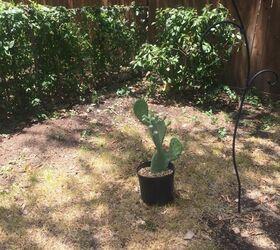 Q Cactus Garden