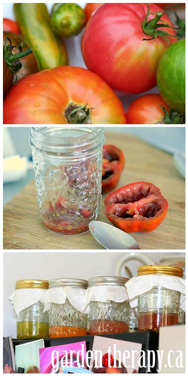 s the easiest ways to grow a bumper crop of tomatoes, Use your saved seeds