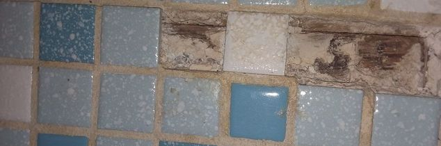 q where can i buy the little tiles showed in the picturr below