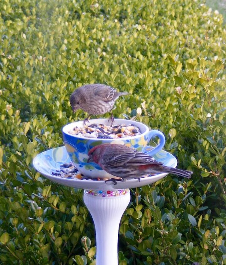 s 18 adorable bird feeders you ll want to make right now, Repurpose Goodwill dishes
