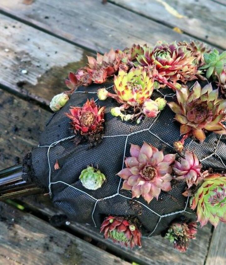 how to make an adorable succulent hedgehog planter out of trash