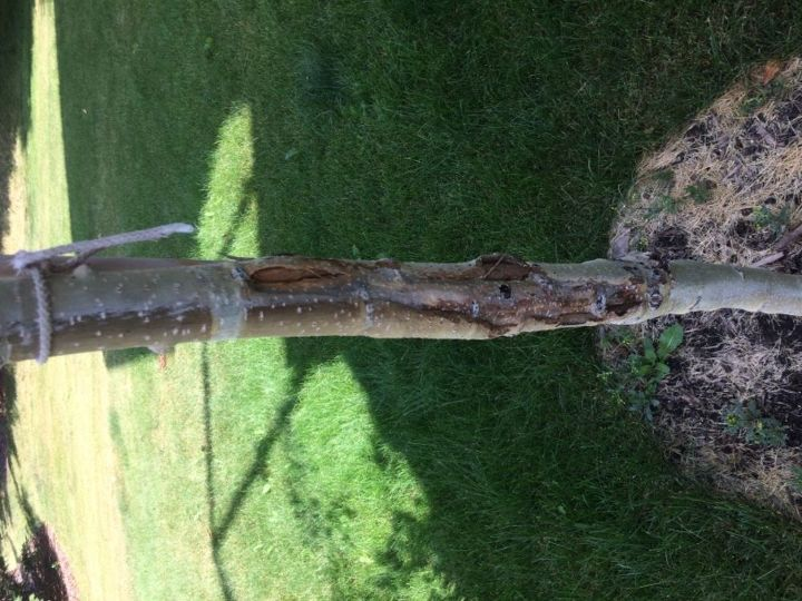 q damaged trunk of the trees