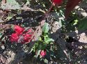 q what can you put on flowering plants to keep the bugs away
