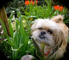 what are the toxic plants for dogs