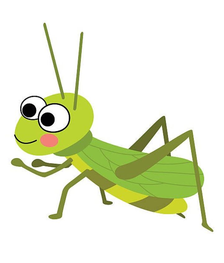 q help there s a cricket in my room