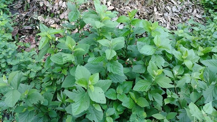 q plant identifier help