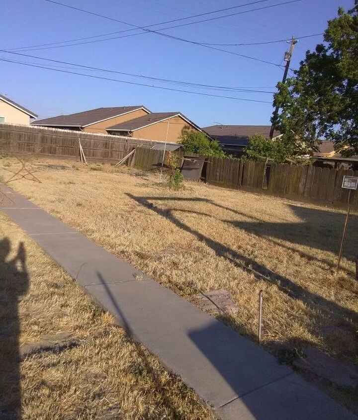 q what is first when revamping a yard full weeds