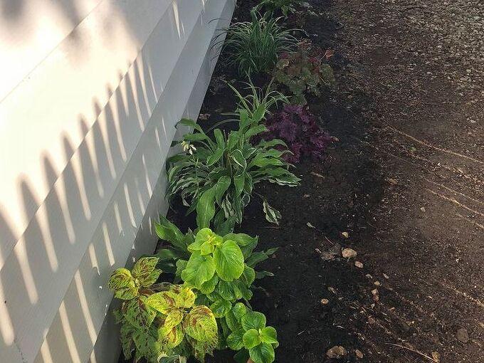 q shade garden needs help