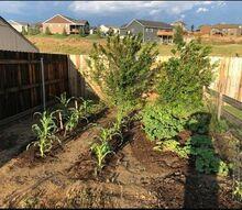 reclamation of a garden space