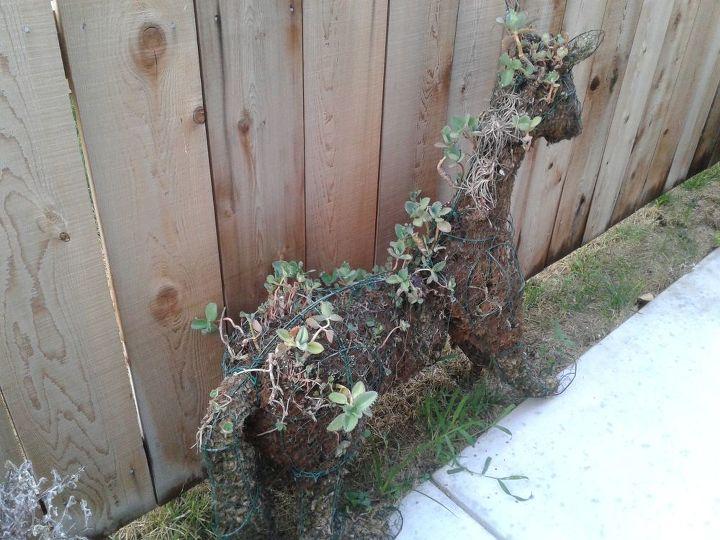 q topiary horse