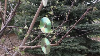 , CDs tied together with fishing line and a heavy bell to ring in the breeze Sunlight glittering as the CDs spin also seems to help