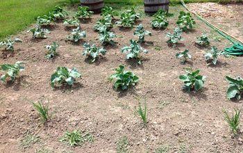 summertime garden hacks