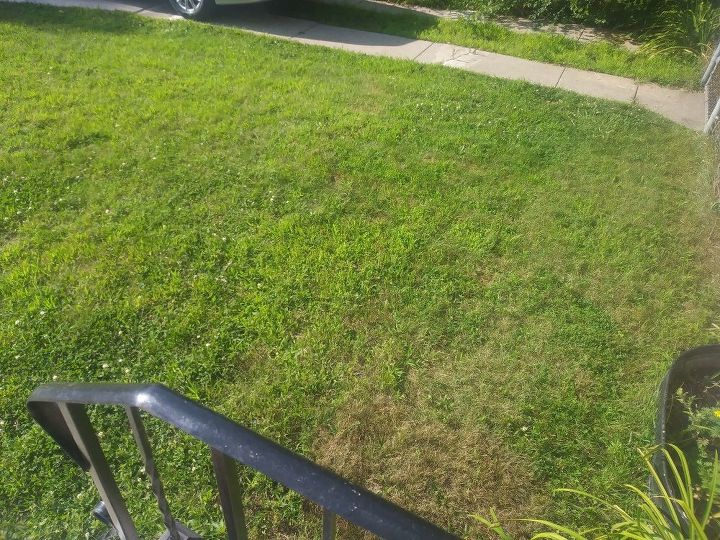 q how can i stop these weeds in my lawn