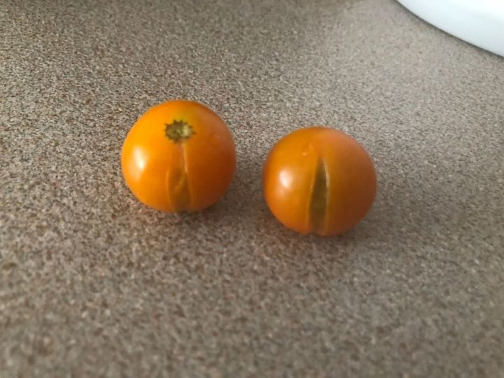 q orange tomotoes cracking