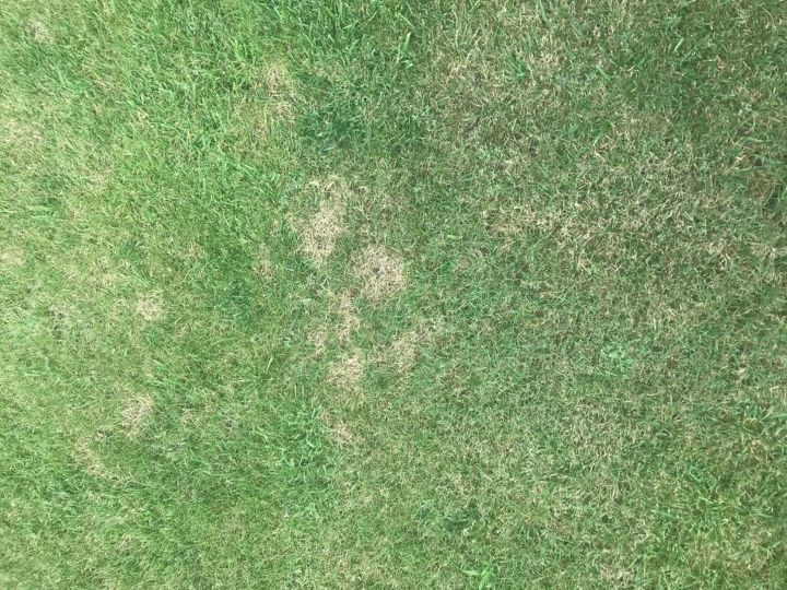 q yellow spots on my lawn