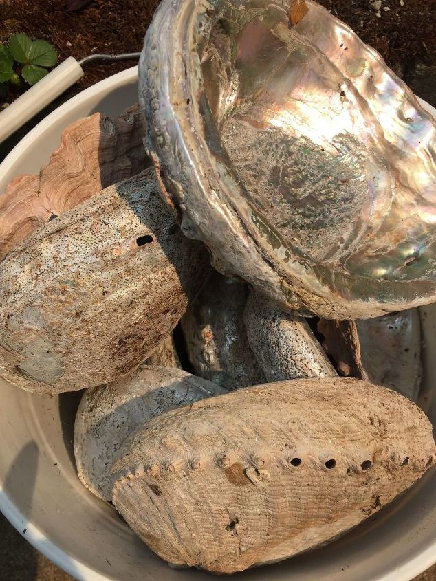 q how do i use these clam and abalone shells in my yard