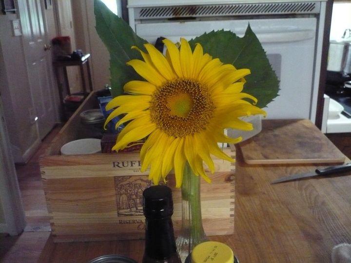 q hot weather brings beautiful flowers
