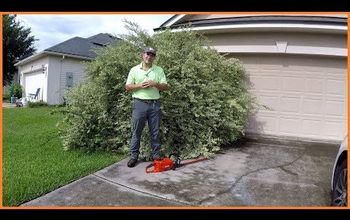 This Shrub is so Big They Can't Use the Garage...