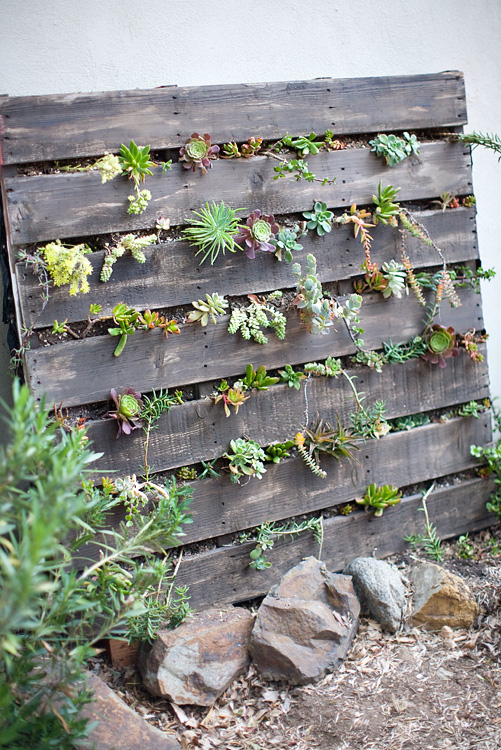 s pallets pallets pallets, Stand it up fill it and plant it