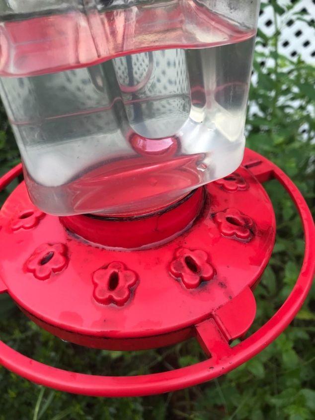 q hummingbird feeder turning black