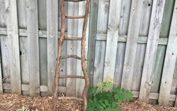 make a rustic garden ladder trellis using tree branches