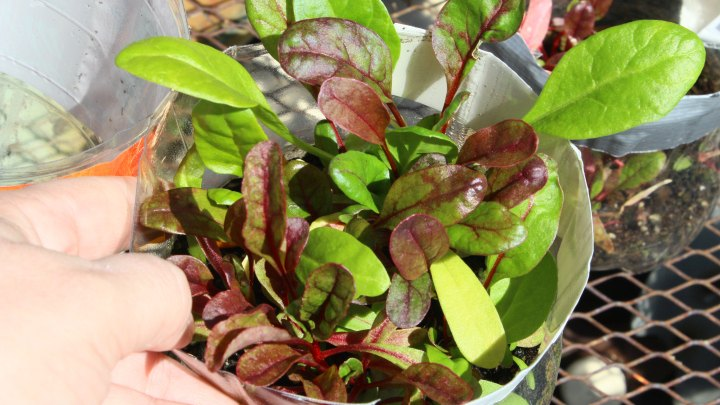 transitioning in the fall garden easy to grow fall garden plants - Fall Garden Plants