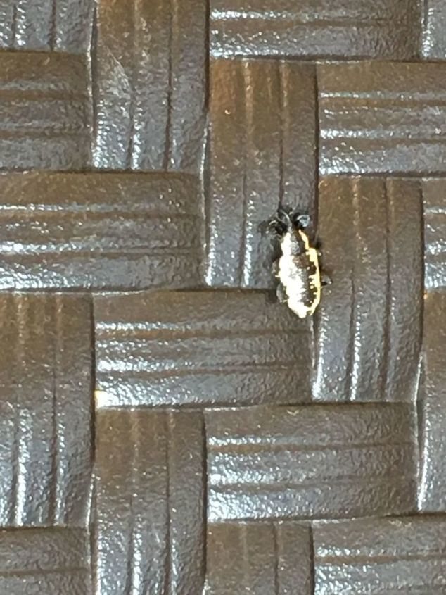 q what type bug is this on back porch never saw anything like it