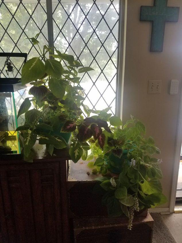 q diy plant stands