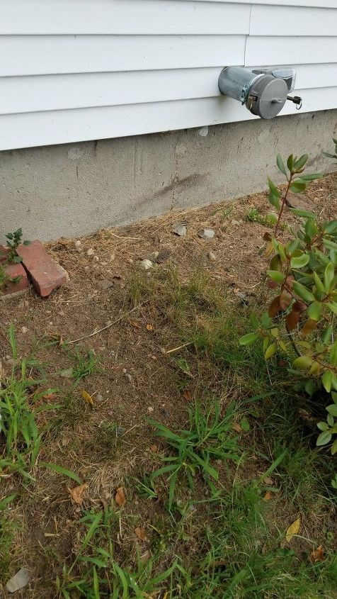q mulch or gravel around plants and in front of house